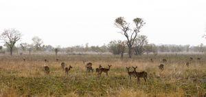 westafricart-080.jpg