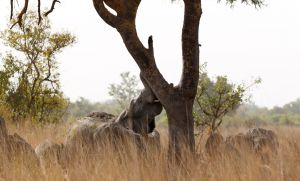westafricart-083.jpg