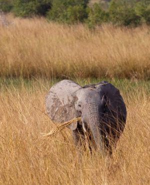 westafricart-090.jpg