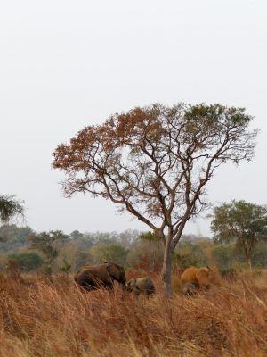 westafricart-100.jpg