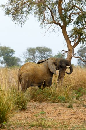 westafricart-103.jpg