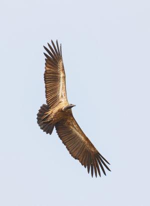 westafricart-118.jpg