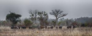 westafricart-132.jpg