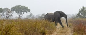 westafricart-138.jpg