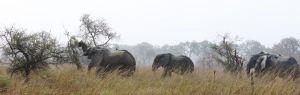 westafricart-141.jpg