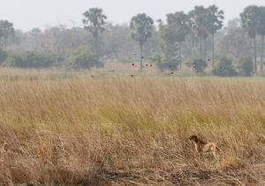 westafricart-160.jpg