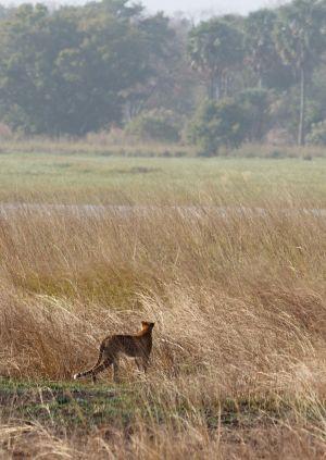 westafricart-161.jpg