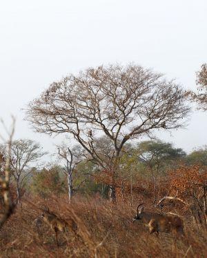 westafricart-165.jpg