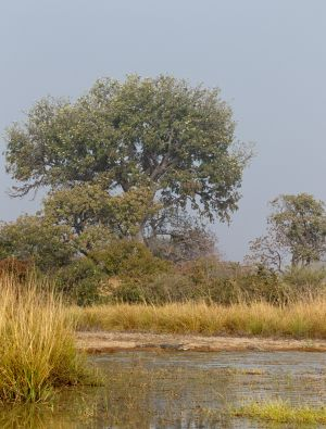 westafricart-178.jpg