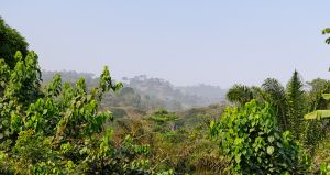 westafricart-200.jpg