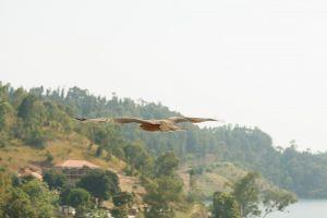 Rwanda-034.jpg